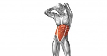 Abdominal Muscles - Golf Anatomy and Kinesiology
