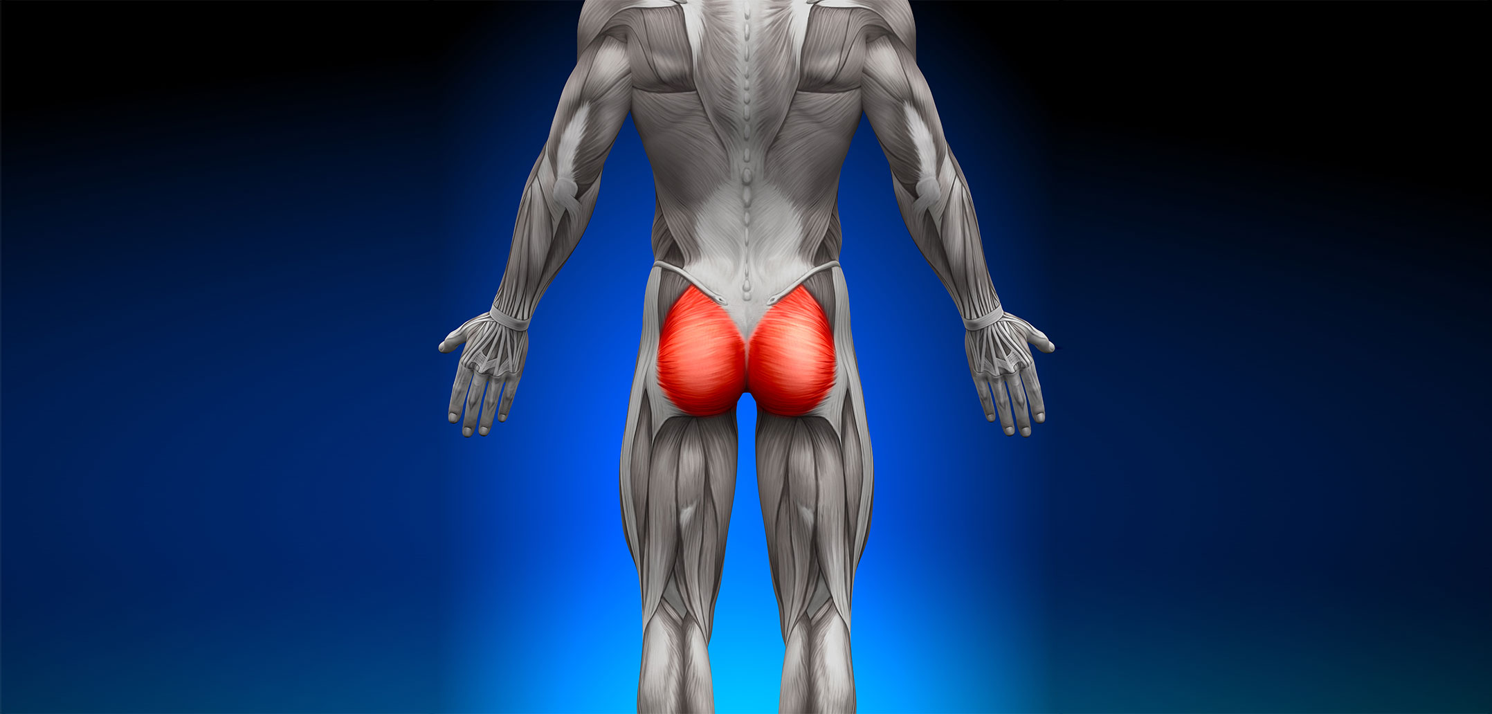 Gluteal muscles | Golf Loopy - Play Your Golf Like a Champion