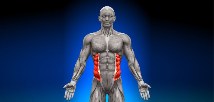 The Role of the Obliques in the Golf Swing - Golf Anatomy and Kinesiology