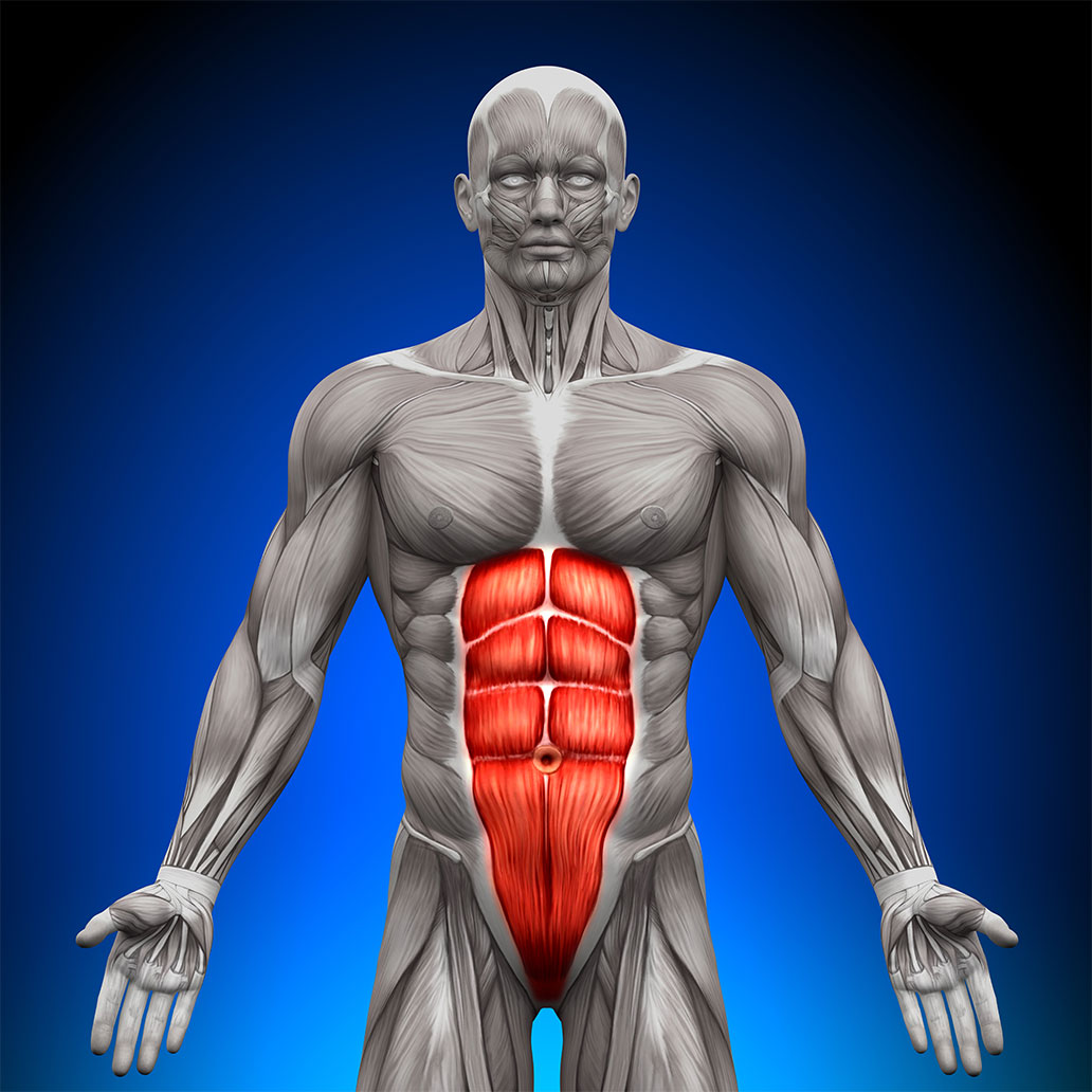 how to grow ab muscles