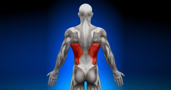 The Role of the Lats in the Golf Swing - Golf Anatomy and Kinesiology