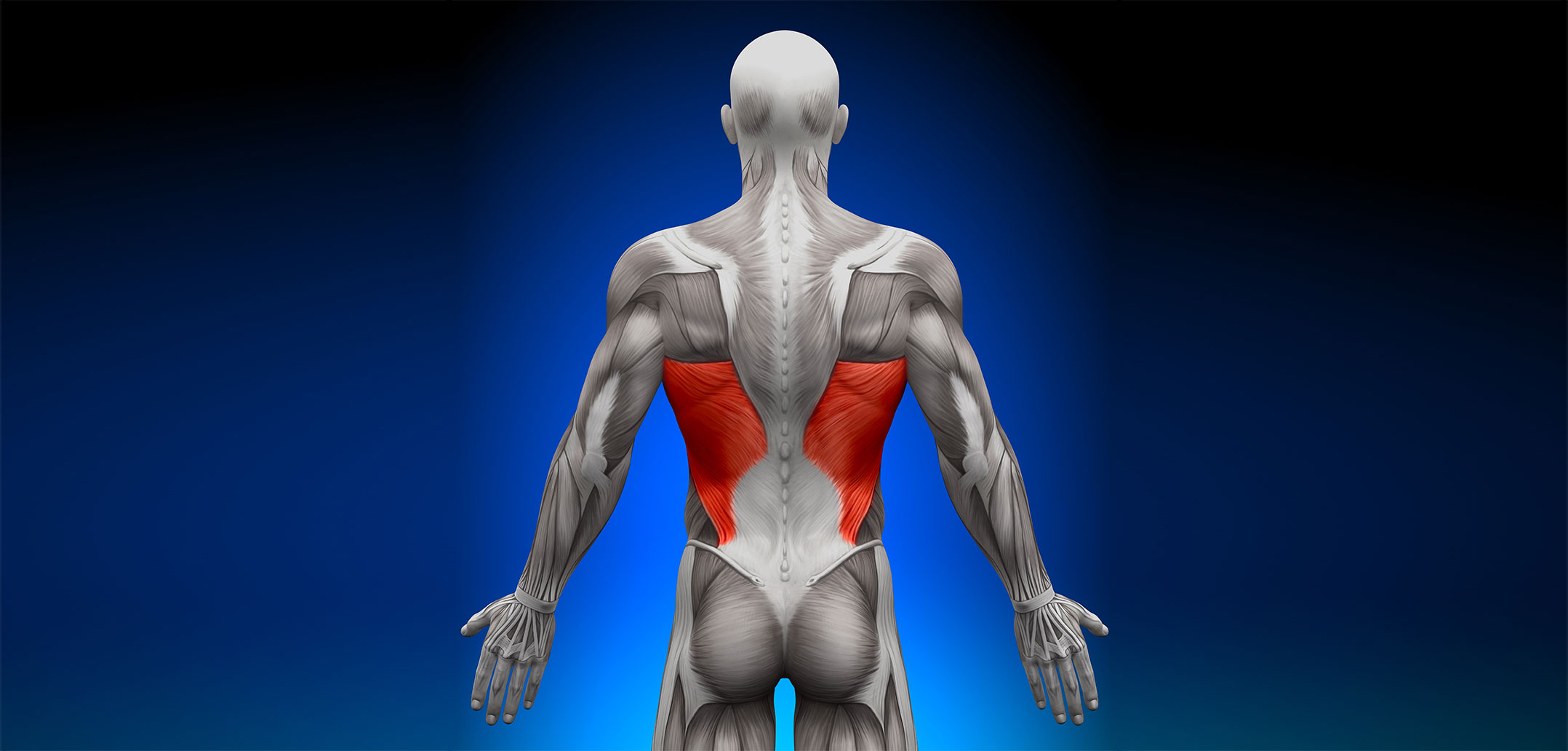 latissimus dorsi muscle | golf loopy - play your golf like a champion, Human Body