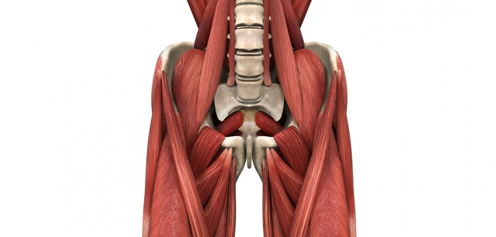 The Role of the Psoas Major in the Golf Swing - Golf Anatomy and Kinesiology