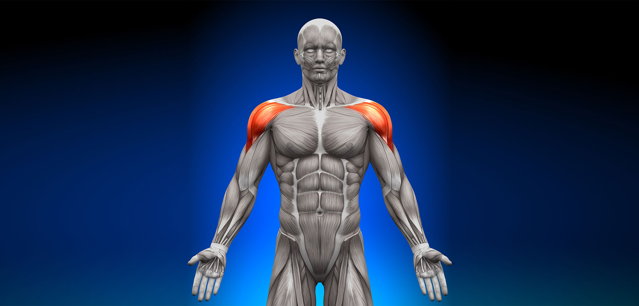 Deltoid Muscle Golf Loopy Play Your Golf Like A Champion