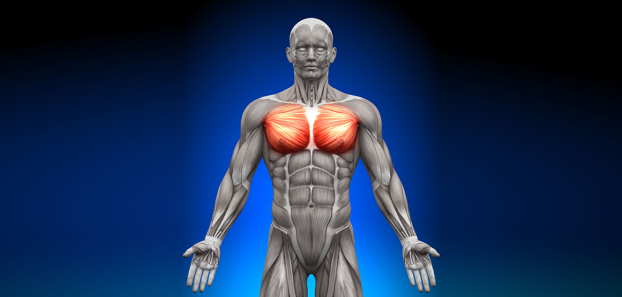 Pectoralis Major Muscle Golf Loopy Play Your Golf Like A Champion