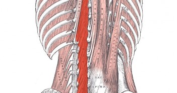 The Role of the Multifidi in the Golf Swing - Golf Anatomy and Kinesiology