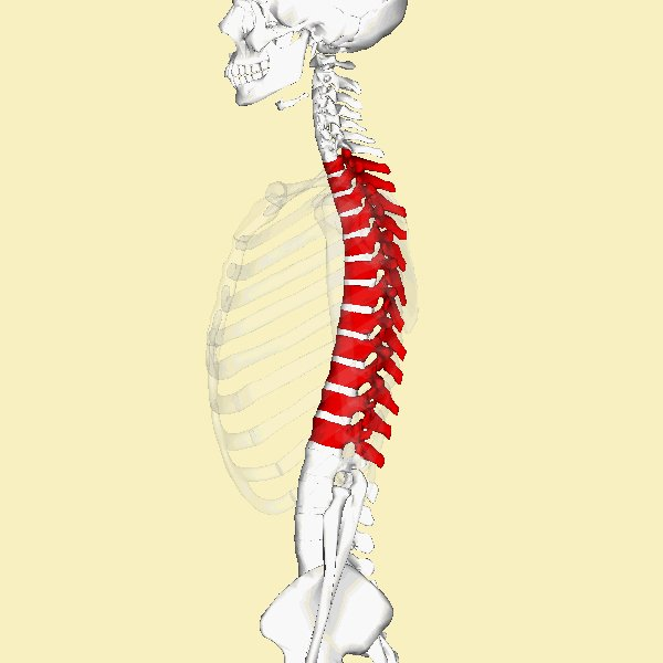 thoracic spine mobility exercises pdf