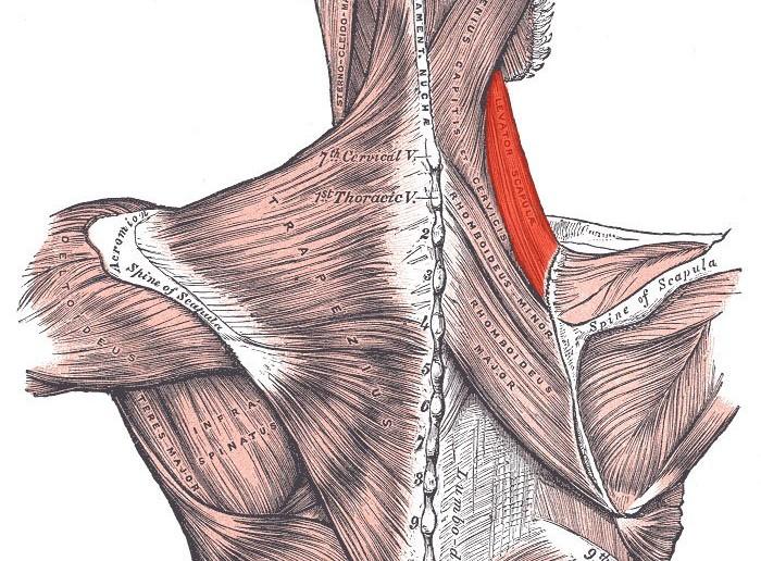 Golf Anatomy and Kinesiology
