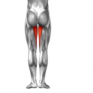 Adductor Magnus - Golf Anatomy and Kinesiology