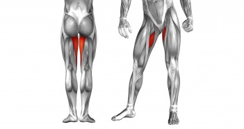 The Role of the Hip Adductors in the Golf Swing - Golf Anatomy and Kinesiology