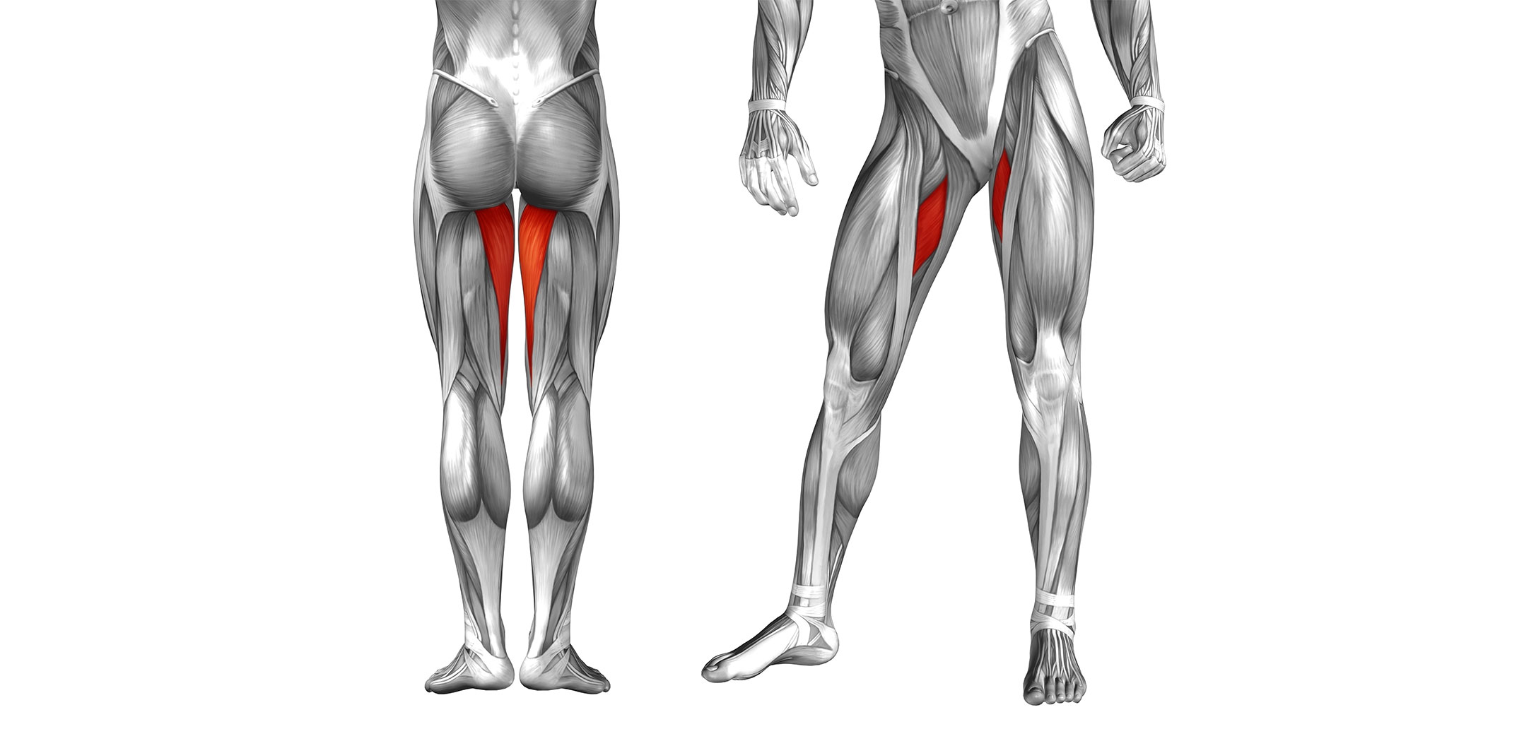 Hip Adductor Muscles Golf Loopy Play Your Golf Like A Champion